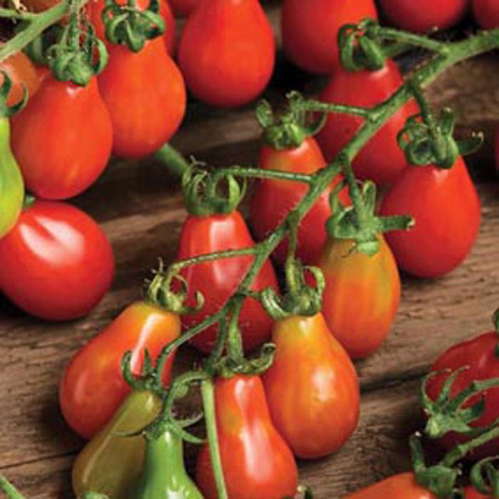 tomat peer