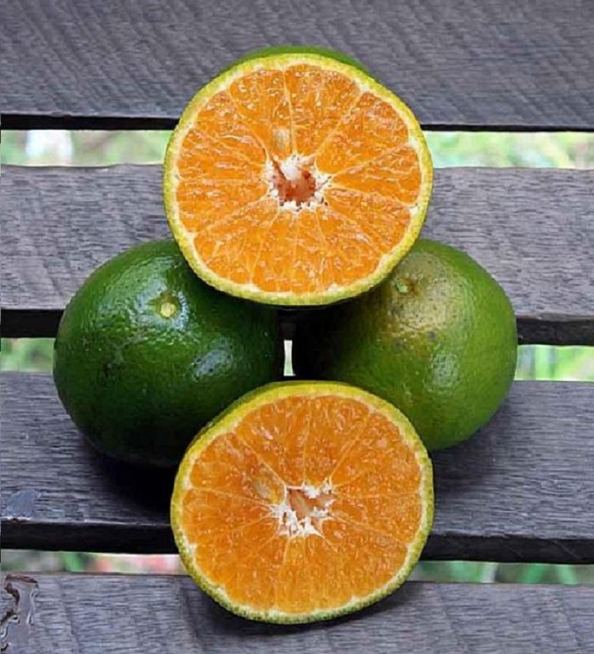 4 Manfaat Jeruk Nipis untuk Diet Sehat Alami